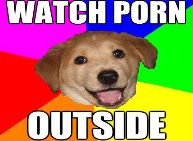 Полицейские научили собаку искать жёсткие диски с порно. Изображение № 1.