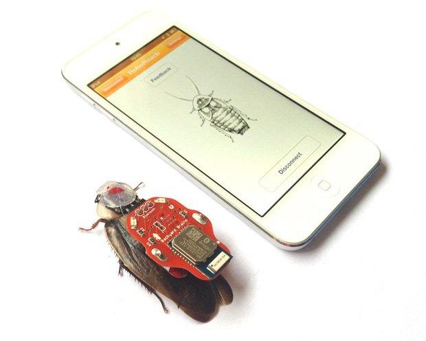 В США появятся наборы для создания киборгов из тараканов. Изображение № 1.