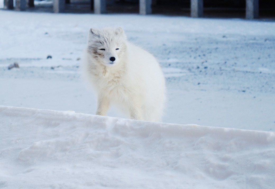 «А давайте все тут заморозим»: Как я провел две недели на Шпицбергене. Изображение № 13.