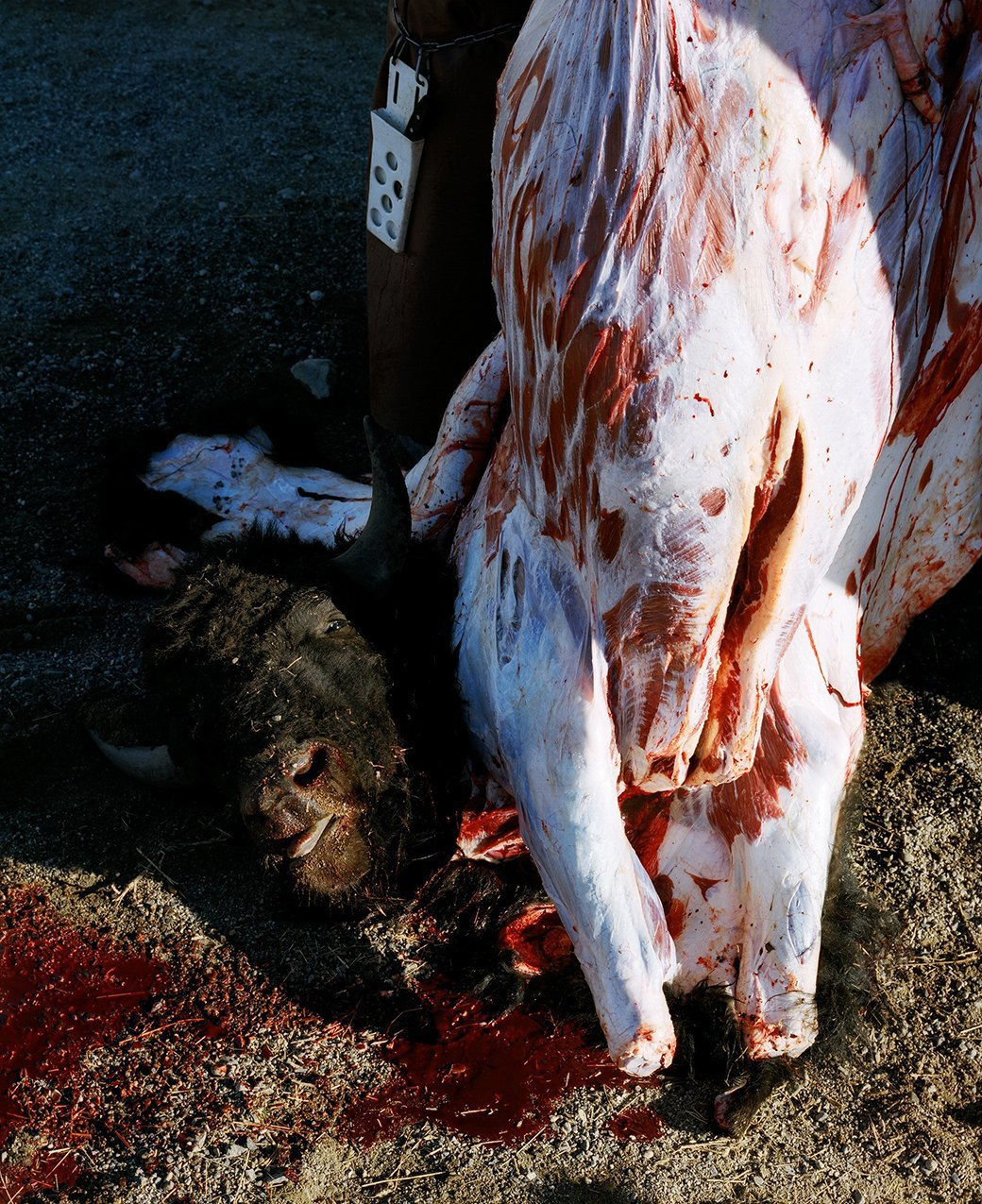 Бытовая жизнь работников бизоньего ранчо в США . Изображение № 18.