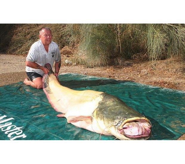 Англичанин поймал самого большого сома-альбиноса. Изображение № 4.