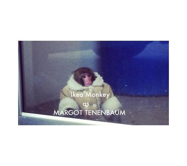 В Канаде обезьяна в пальто зашла в магазин IKEA. Изображение №16.