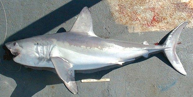 В метро Нью-Йорка нашли мертвую акулу. Изображение № 1.