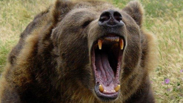 Житель Якутии зарезал ножом напавшего на него медведя. Изображение № 1.