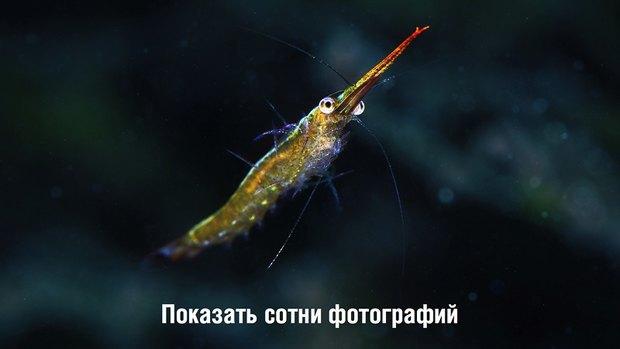 Российские ученые-энтузиасты собирают 1,5 млн рублей на кругосветную экспедицию. Изображение № 4.