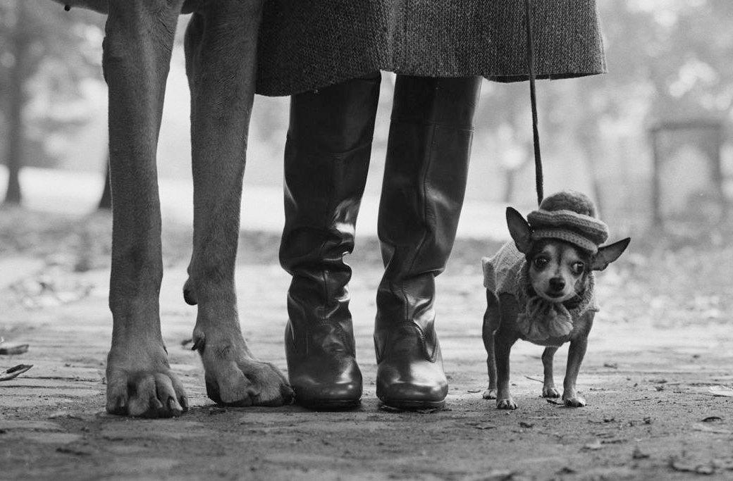 20 снимков, которыми гордится компания Leica. Изображение № 4.