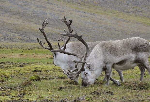 «Были только мы, олени, опять олени и рыба»: 7 дней английского телеведущего на Ямале. Изображение № 10.