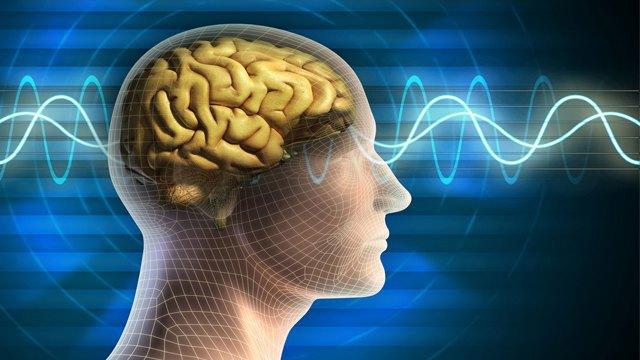 Учёные нашли способ увеличить интеллект человека за счёт жидкостных имплантатов. Изображение № 1.