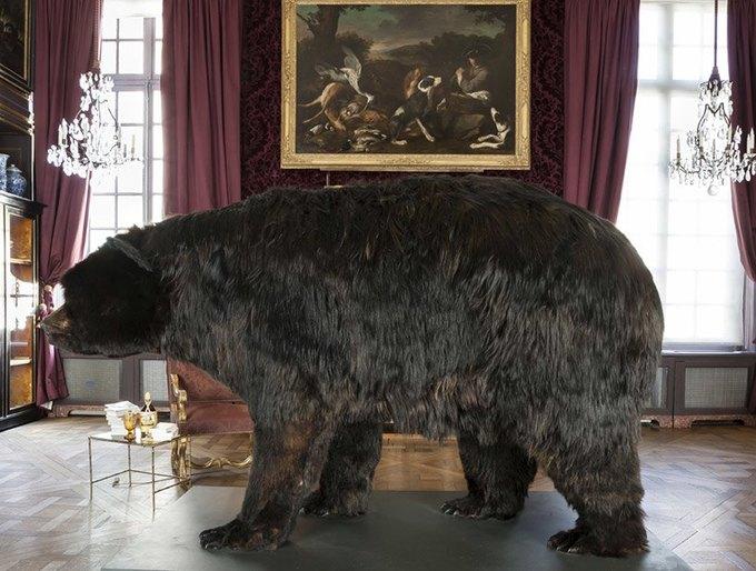 Художник из Франции прожил две недели в чучеле медведя. Изображение № 1.