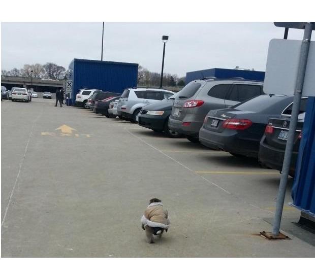 В Канаде обезьяна в пальто зашла в магазин IKEA. Изображение №6.
