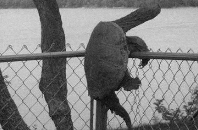Животные вне закона: Как звери противостояли силам правопорядка. Изображение № 3.