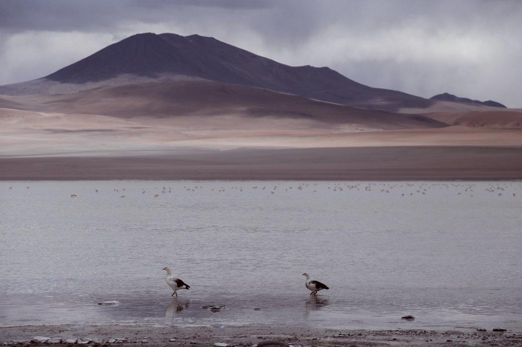 Буря в пустыне: Фоторепортаж с ралли «Дакар-2014» . Изображение № 14.