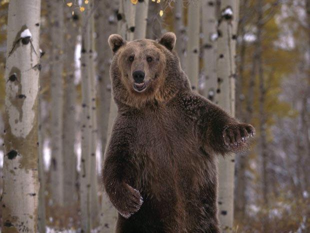 80-летний пенсионер избил проходящего медведя . Изображение № 1.