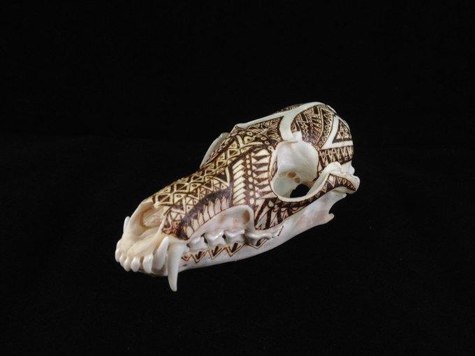 Питер Дроус: Пирография на черепах диких зверей. Изображение № 4.