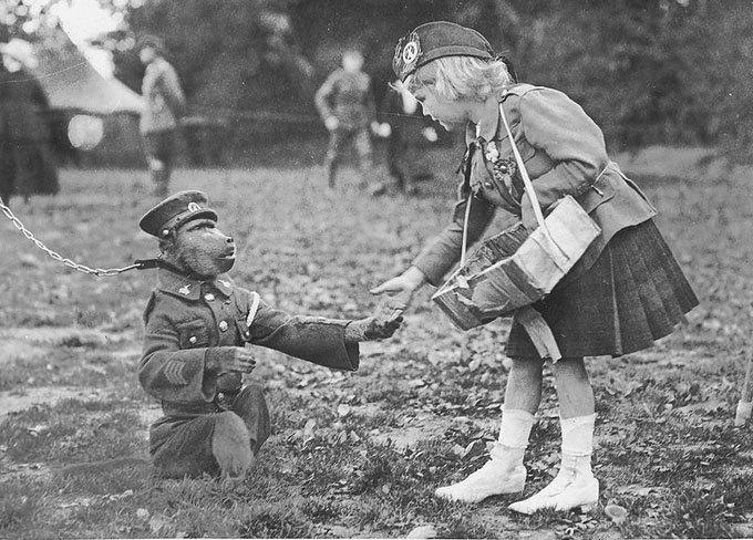 Как обезьяна-капрал, медвежонок-рядовой и другие животные помогали солдатам на войне. Изображение № 4.