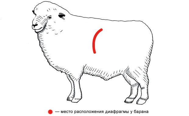 Популярно о мясе: Как выбрать, сохранить и даже улучшить уже купленное мясо. Изображение №3.
