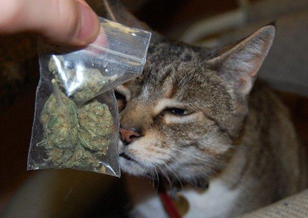 В Новой Зеландии кот принёс домой пакет с марихуаной . Изображение № 1.