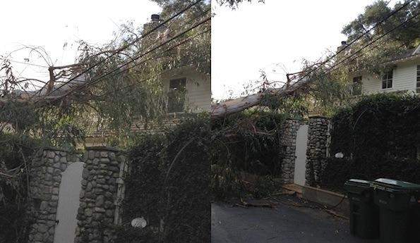 Актер Дэйн Эрик подал в суд на Билли Коргана из The Smashing Pumpkins из-за упавшего дерева. Изображение № 5.