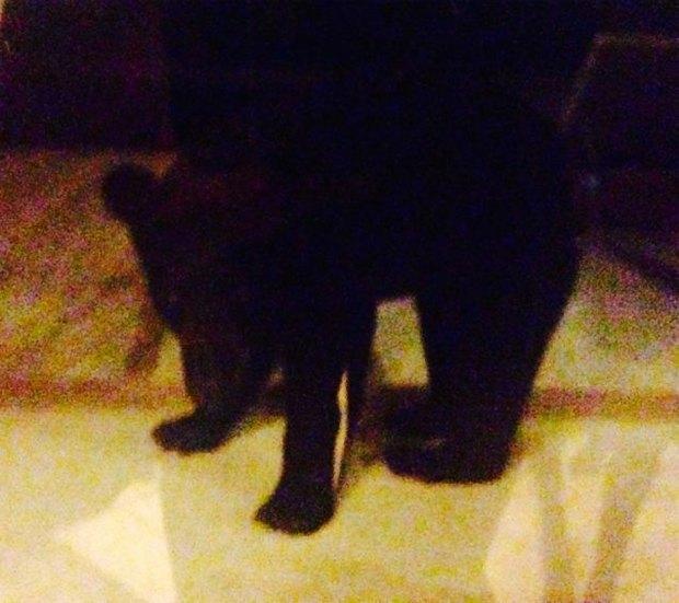 Пьяный медведь ограбил дом во Флориде. Изображение № 2.