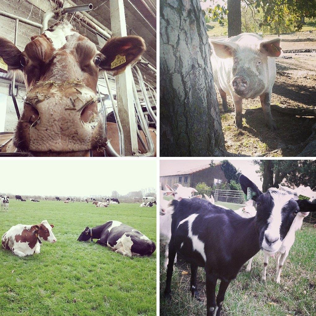 Что публикуют в своих Instagram фермеры разных стран. Изображение № 5.