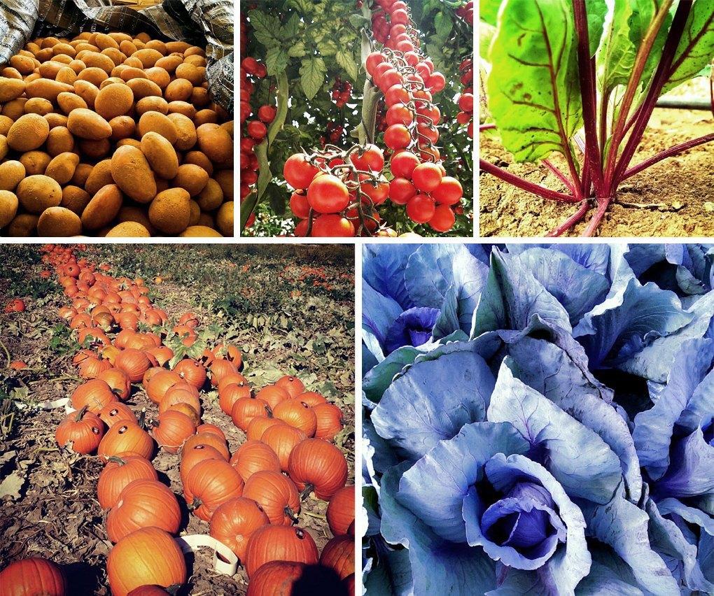 Что публикуют в своих Instagram фермеры разных стран. Изображение № 3.