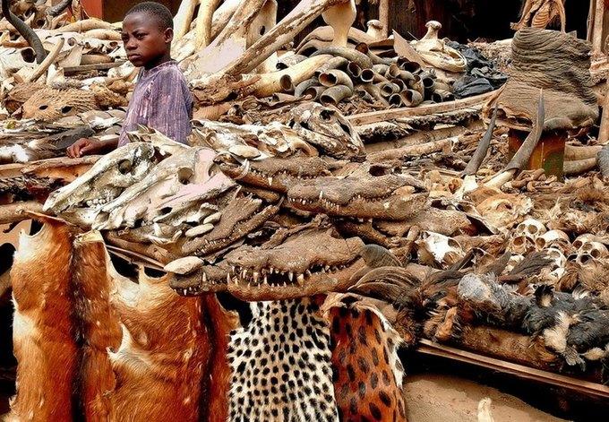 В Нигерии поймали колдунов, варивших зелья из человеческих внутренностей. Изображение № 1.