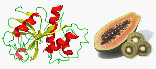 Естественный фермент папаин содержится в папайе и может сделать мясо куда более мягким . Изображение № 17.
