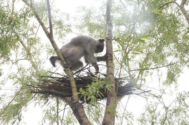 Китайские ВВС взяли на службу взвод обезьян. Изображение № 2.