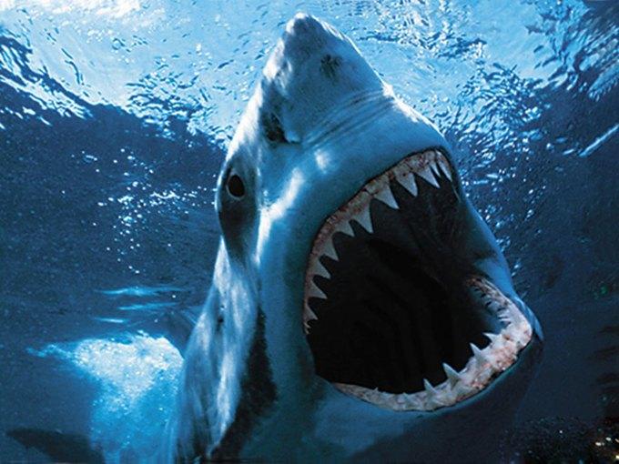 Американский серфер спасся от акулы, ударив ее в глаз. Изображение № 1.