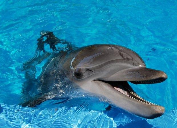 От украинских военных сбежали вооруженные дельфины. Изображение № 1.