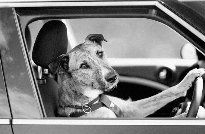 Животные вне закона: Как звери противостояли силам правопорядка. Изображение № 2.