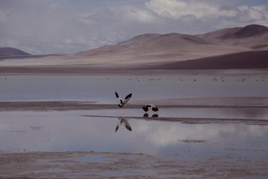 Буря в пустыне: Фоторепортаж с ралли «Дакар-2014» . Изображение № 18.