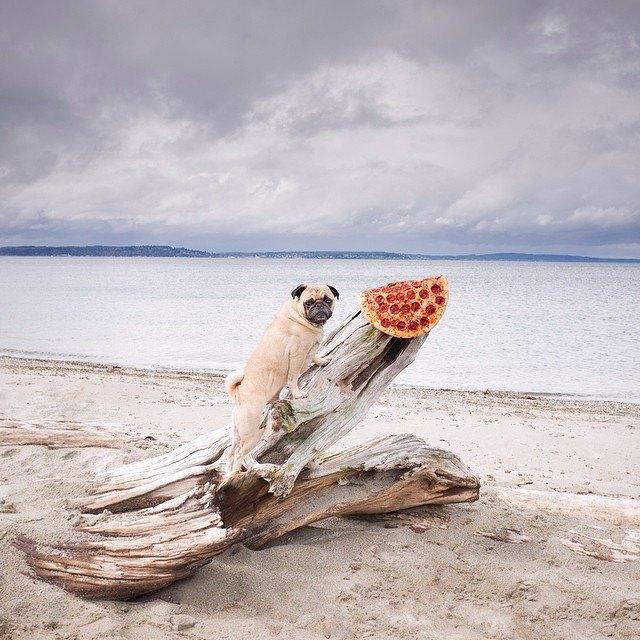 Pizza in the Wild: Приключения пиццы пепперони в проекте Джона Пола Дугласа. Изображение № 21.