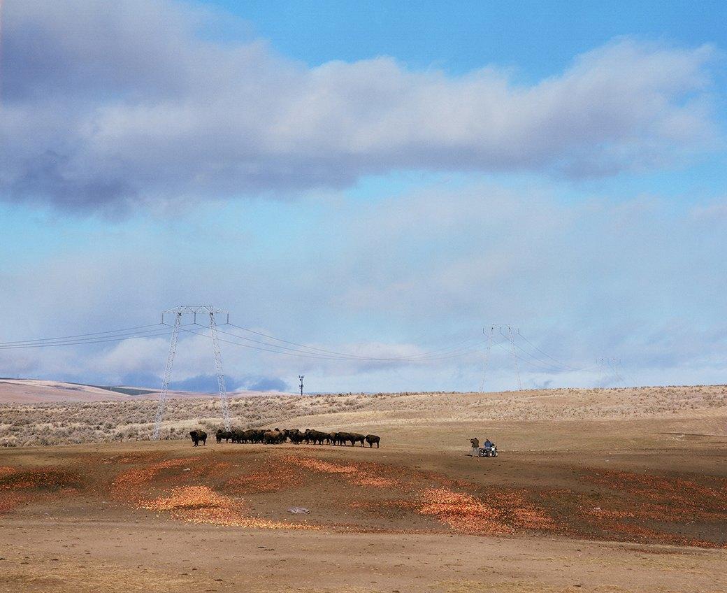Бытовая жизнь работников бизоньего ранчо в США . Изображение № 4.