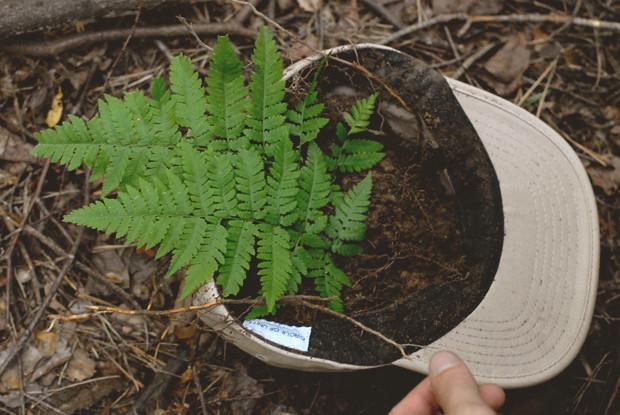 Начало эксперимента: Редакция FURFUR посадила хэритейдж-лук. Изображение № 10.