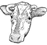 Задать жару: Основы приготовления мяса на открытом огне. Изображение № 65.