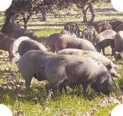 Популярно о мясе: Как выбрать, сохранить и даже улучшить уже купленное мясо. Изображение №5.