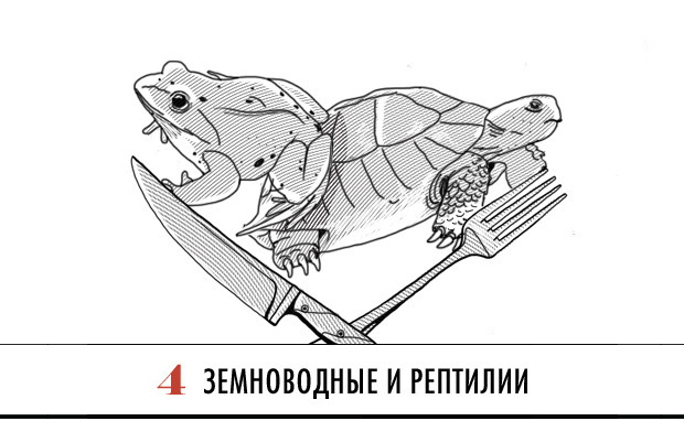 Совет: Как есть экзотические блюда. Изображение № 5.