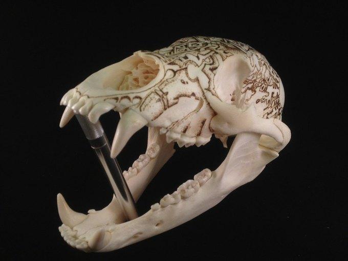 Питер Дроус: Пирография на черепах диких зверей. Изображение № 1.