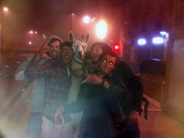 Французские студенты ограбили цирк и украли цирковую ламу. Изображение № 1.