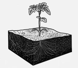 Ультимативный гид по выращиванию в домашних условиях. Изображение № 2.