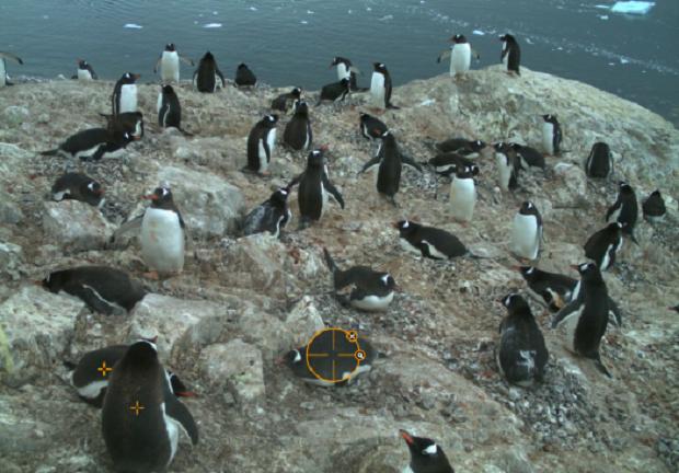 Учёные попросили людей отмечать пингвинов на фотографиях Антарктиды. Изображение № 1.