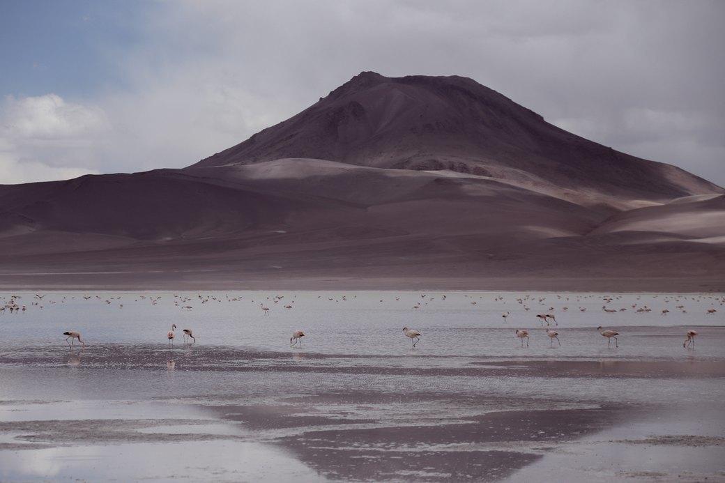 Буря в пустыне: Фоторепортаж с ралли «Дакар-2014» . Изображение № 9.