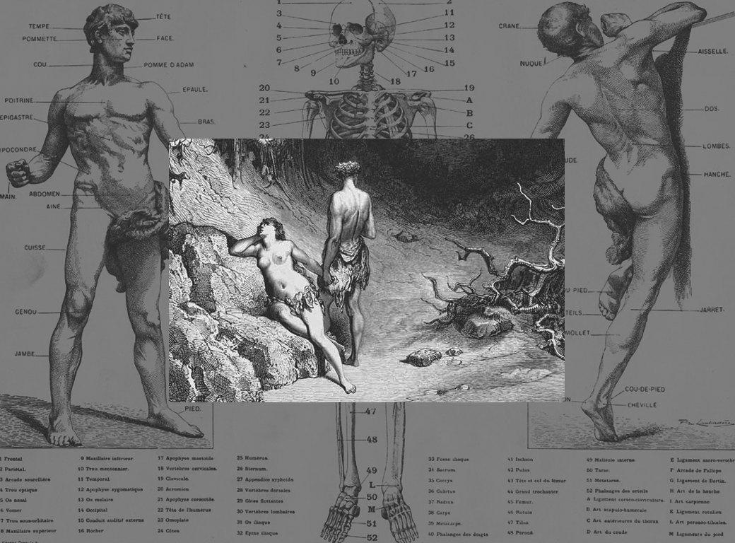 Неизвестный секс: Журналист Мэри Роуч разбирает историю импотенции с научной точки зрения. Изображение № 3.