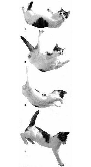 iPhone научат падать по-кошачьи. Изображение № 1.