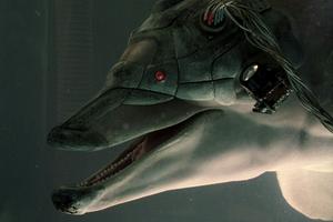 От украинских военных сбежали вооруженные дельфины. Изображение № 3.