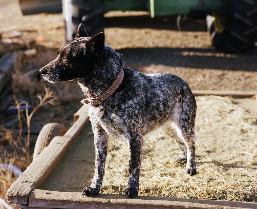 Бытовая жизнь работников бизоньего ранчо в США . Изображение № 13.