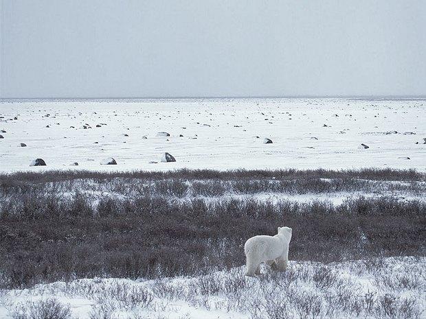 Вершина мира: Как я провел 26 дней на Аляске. Изображение № 19.