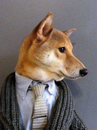 В новом блоге на Tumblr собака демонстрирует мужскую одежду. Изображение № 4.