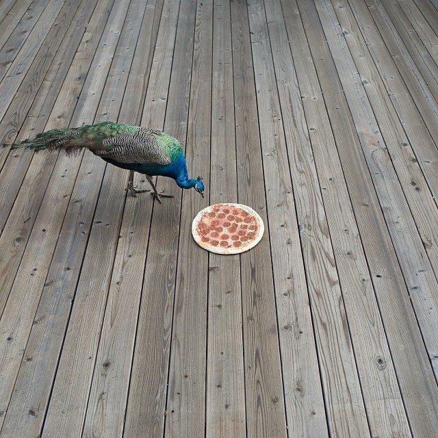 Pizza in the Wild: Приключения пиццы пепперони в проекте Джона Пола Дугласа. Изображение № 4.